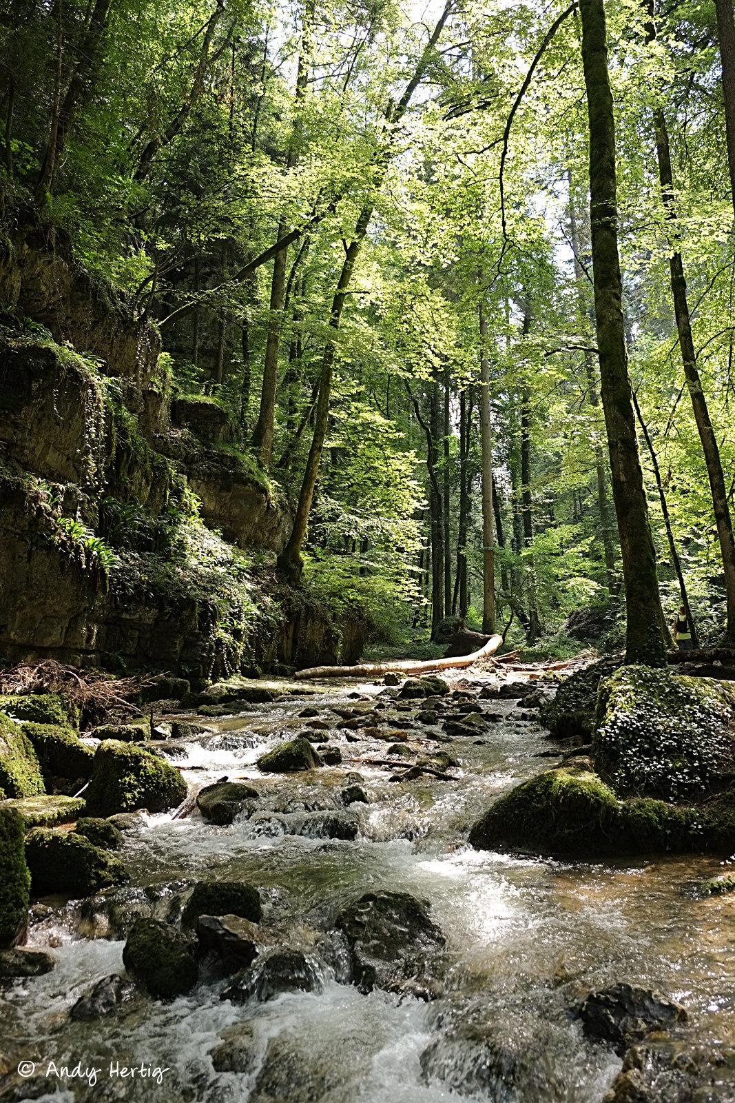 Das Kaltbrunnental - ein wunderschöner Ort zum entspannen.